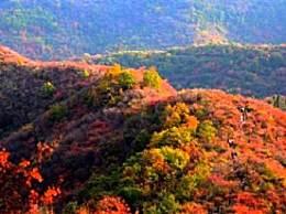 韩城香山红叶节在哪儿?怎么去?免费门票领取指南
