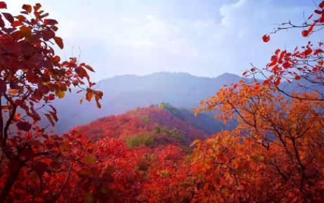 陕西韩城红叶节什么时候开始?韩城红叶节最新活动汇总