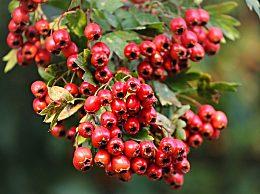 早上空腹吃水果好吗?早上不宜空腹吃的8种水果