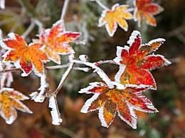 今年霜降是几月几号?霜降的气候特点介绍