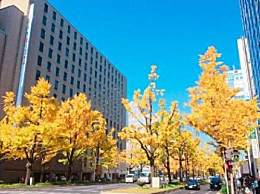 秋天去京都怎么玩?京都秋天最美景点旅游攻略收下吧!