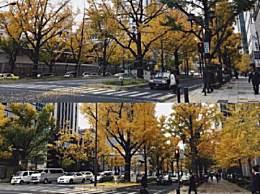 大阪赏银杏叶去哪儿好?最好看的不是大阪城公园而是它