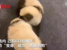 将狗染色成熊猫收费1500 宠物染色对身体有害吗