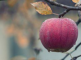 为什么霜降后的苹果更好吃?霜降后的苹果更甜是真的吗