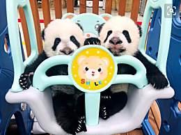 三只大熊猫宝宝全国征名 快来给熊猫宝宝取名吧