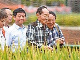 袁隆平杂交水稻测产突破1000公斤 袁隆平:杂交稻让我没时间变老