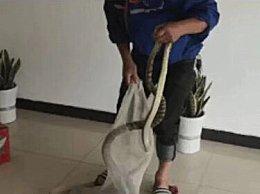男子带活蛇坐高铁 送酒店供厨房烹饪使用