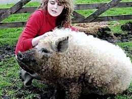 世界罕�的�d羊�i 堪�Q最神奇的品�N