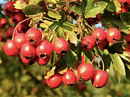 秋季喝什么茶养生?适合秋天喝的养生茶推荐