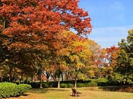 大阪旅游几月去最好?大阪旅游线路推荐