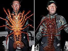 世界上最大的龙虾 体型重达40斤