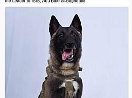 特朗普晒英雄犬 它在追捕巴格达迪时表现超棒