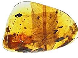 亿年前凶猛古鸟类 一亿年前的鸟类原来长这样