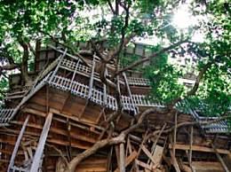 世界最大树屋被烧 设计师12年心血付之一炬