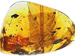 亿年前凶猛古鸟类 古鸟化石被发现长什么样子