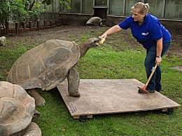 世界上最大的陆龟 体重高达800斤