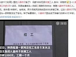 """火晶柿子采摘工月薪3万 火爆订单让采摘工成了""""香饽饽"""""""