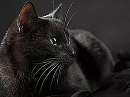 家里养黑猫吉利吗?养黑猫有什么禁忌?