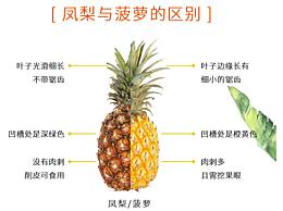 凤梨和菠萝是一种水果吗 凤梨和菠萝的区别在哪里