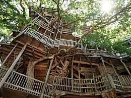 世界最大树屋被烧 花费12年心血建成15分钟付之一炬
