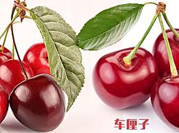 樱桃和车厘子一样吗 樱桃和车厘子的3大区别 一看就懂