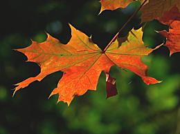 11月是什么季节 11月是秋天还是冬天