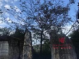 重庆武隆周末游去哪儿好?武隆最适合带孩子景点推荐