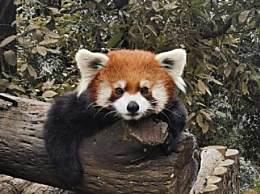 云南野生动物园门票多少钱?