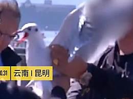 游客手抓海鸥强行喂食合影 吓坏大片海鸥