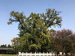 盘点国内最有名的树 每一棵都有一段传说