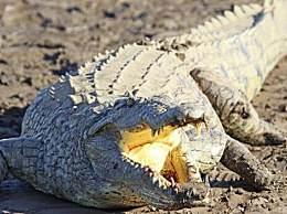 11岁女孩斗鳄鱼 原来竟是为了救朋友脱险