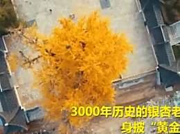 中国银杏之乡在哪里?银杏大道地址收下吧!