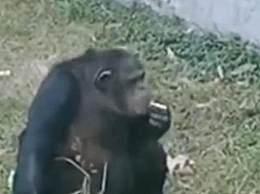 动物园黑猩猩抽烟 网友怒斥行为太可怕