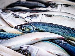 三款鳝鱼的家常做法 黄鳝的饮食禁忌