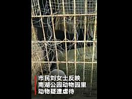 动物园梅花鹿腿腐烂 园方否认有虐待动物的行为
