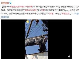 鲸鱼监狱放归最后一批白鲸 海洋围场内关押近百头鲸鱼