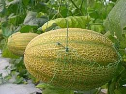 哪些水果的维生素a含量高 十大维生A含量高的水果介绍