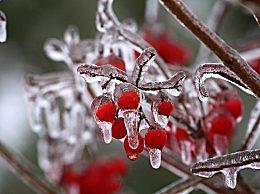 立冬温馨的朋友圈早安说说大全 愿你冬日快乐
