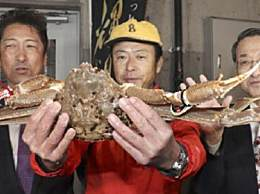 日本螃蟹500万 天价螃蟹破世界纪录