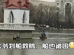 哈师大的天鹅冻湖上了 大爷救鹅却双双被困湖上