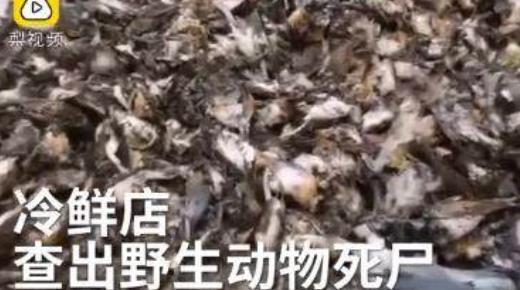 特产店藏7000只动物 7000余只野生动物尸体摆满屋