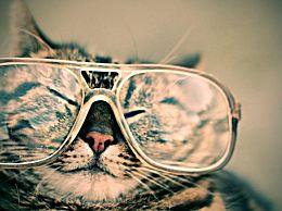 如何选择适合自己的眼镜?不同脸型与不同眼镜搭配