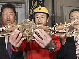 日本一螃蟹500�f 天�r海�r打破世界�o�