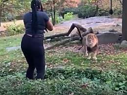 女子在狮子面前跳舞 被警方逮捕