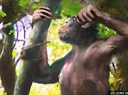类人猿化石被发现 新研究有望改写人类进化史