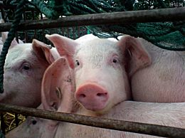 2万月薪招聘名校学生养猪 对专业要求较高