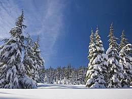 北海道什么时候开始下雪?现在去可以赏雪吗?