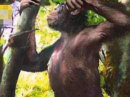 像人又像猿的古猿化石被发现 已有1200万年历史