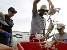 日本一螃蟹500万 日本一螃蟹500万是炒作吗