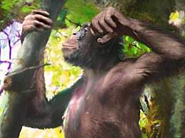 类人猿化石被发现 颠覆对人类进化的理解